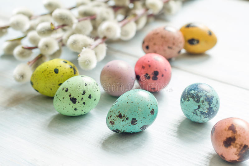 Easter colorful eggs and willow catkins twigs stock images