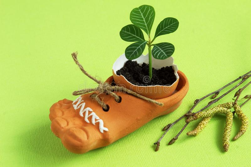 Delicate green sprout in eggshell in brown ceramic shoe with jute cord and birch twigs on light green background. Symbolic concept royalty free stock photos