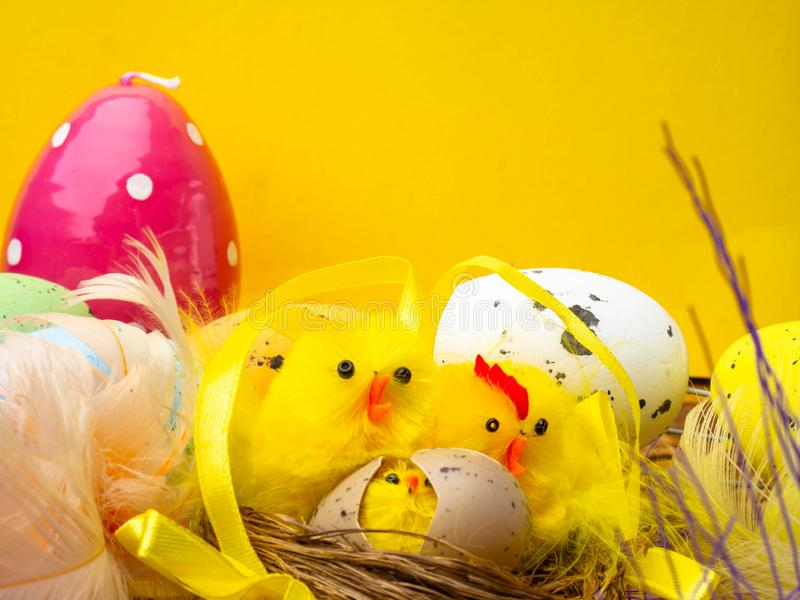 Easter composition, colorful eggs, chicken in nest, color feather. With copy space royalty free stock photo