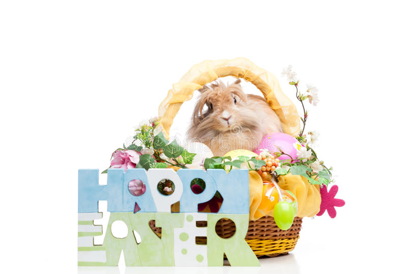 Download Easter composition stock photo. Image of studio, rabbit - 29940954