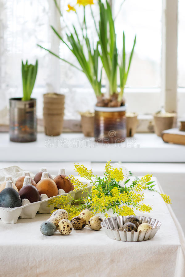 Easter decorated table. Prepare to Easter. White tablecloth table decorated by colored brown chicken and quail eggs with yellow flowers with window as backgrouns stock images
