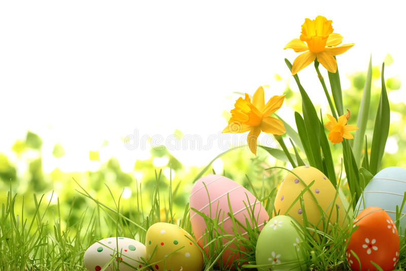 Easter Decoration. Easter eggs hiding in the grass with daffodil royalty free stock photos