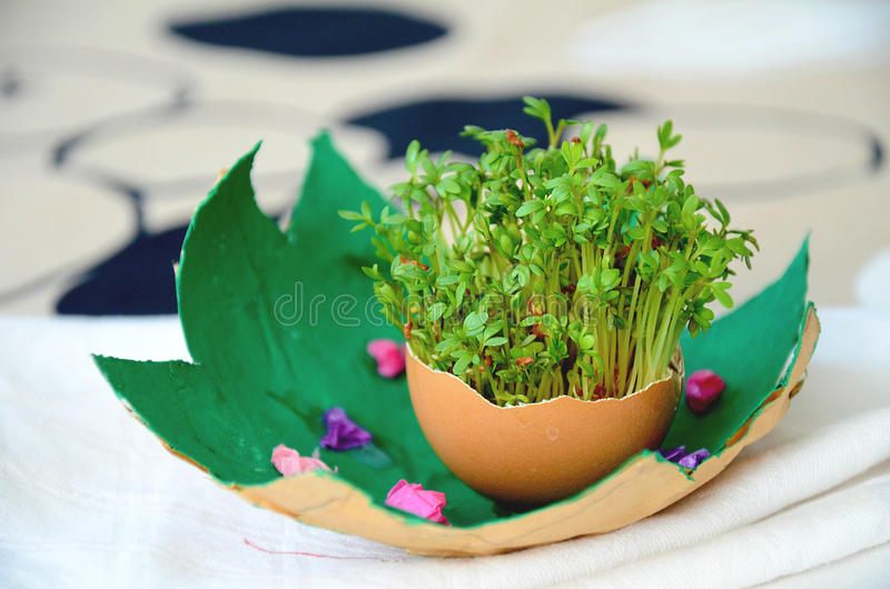 Easter decoration with egg shell and green watercress sprouts royalty free stock photography