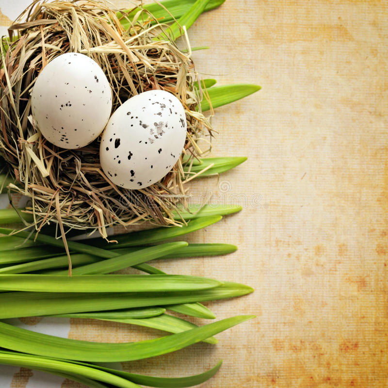Easter decoration. Easter eggs in bird nest and spring green grass. copy space stock images
