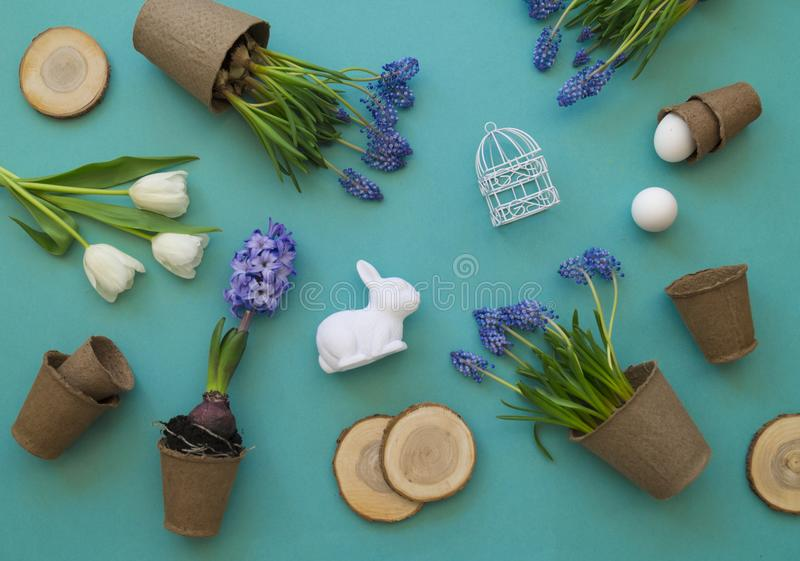 Easter decorative composition on a blue background. White tulips, flower pots, unpainted eggs and a tree. royalty free stock photos