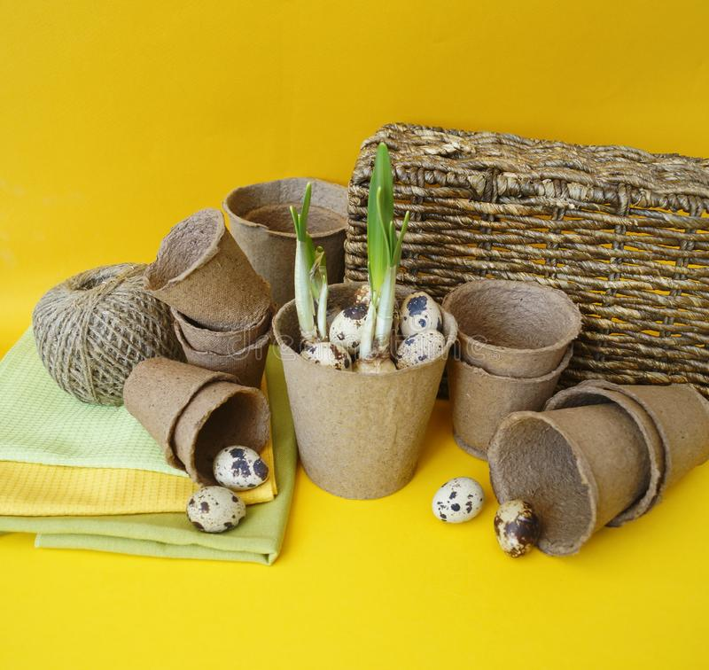 Easter decorative composition on a yellow background. Nest with quail eggs. royalty free stock image