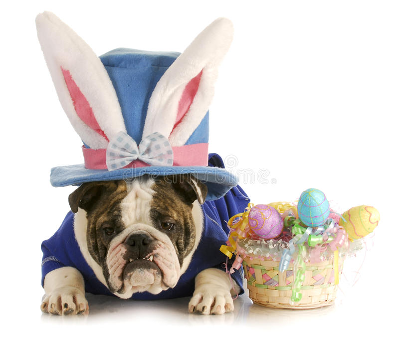 Easter dog royalty free stock images