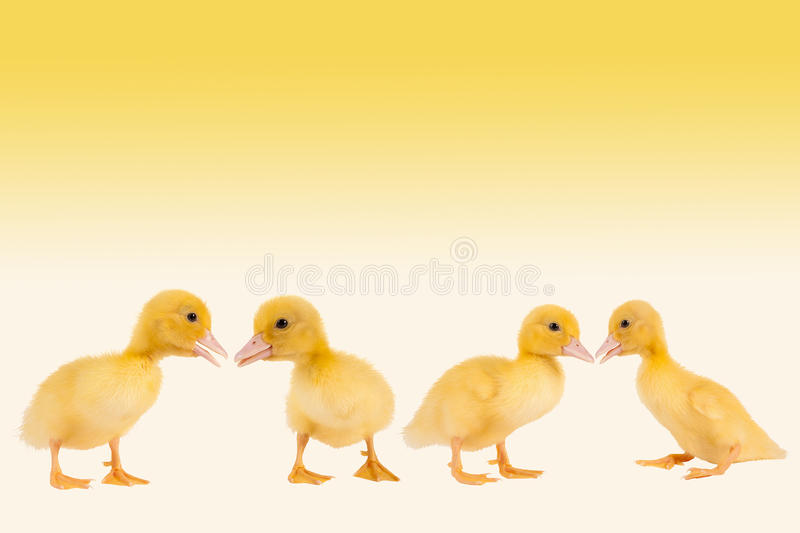 Download Easter ducklings border stock image. Image of empty, easter - 22953549