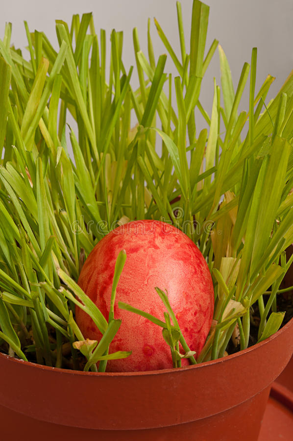 Download Easter Egg In A Brown Flowerpot Stock Image - Image of painted, fresh: 29028877