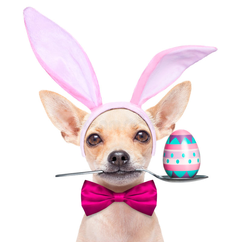 Easter egg bunny dog royalty free stock images