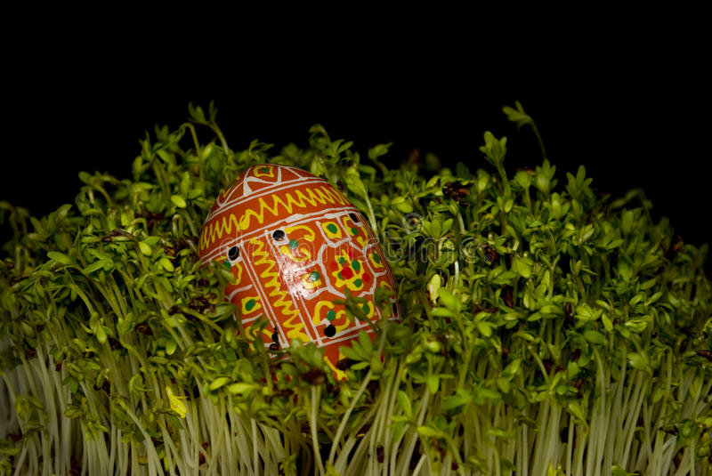 Easter egg on cress. royalty free stock image
