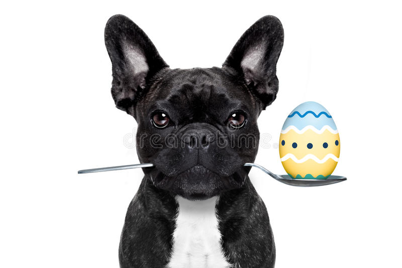 Easter egg dog stock photos