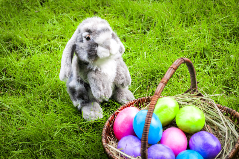Easter egg hunt in a green field royalty free stock image