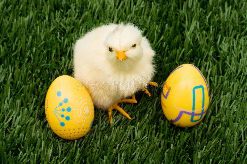 Easter Eggs. Colourful Easter eggs sitting with a chicken on green grass background, Easter Eggs royalty free stock photos