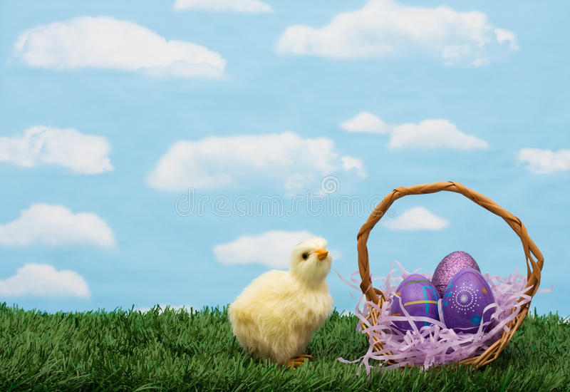 Easter Eggs. Colourful Easter eggs sitting with a chicken on green grass background, Easter Eggs stock images