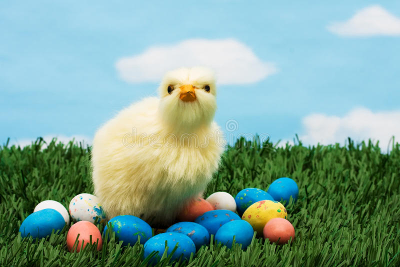 Easter Eggs. Colourful Easter eggs sitting with a chicken on green grass background, Easter Eggs royalty free stock images