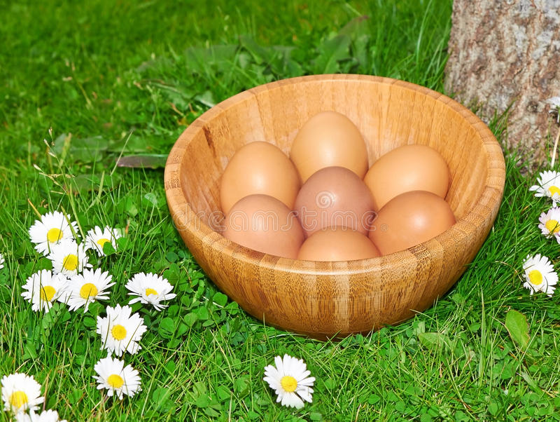 Download Easter eggs stock image. Image of grass, blue, colored - 29427437