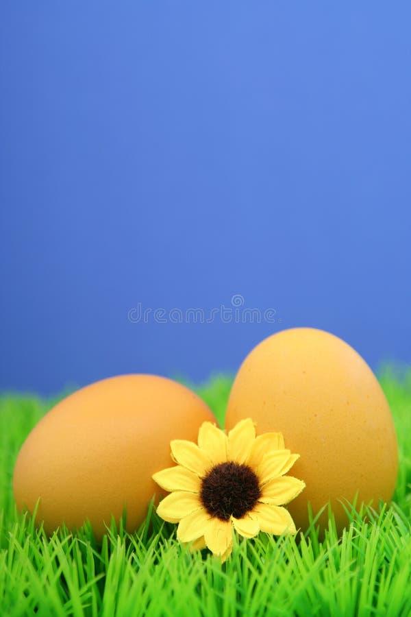 Easter eggs. On grass
