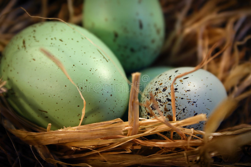 Easter eggs. In an easter basket stock photo