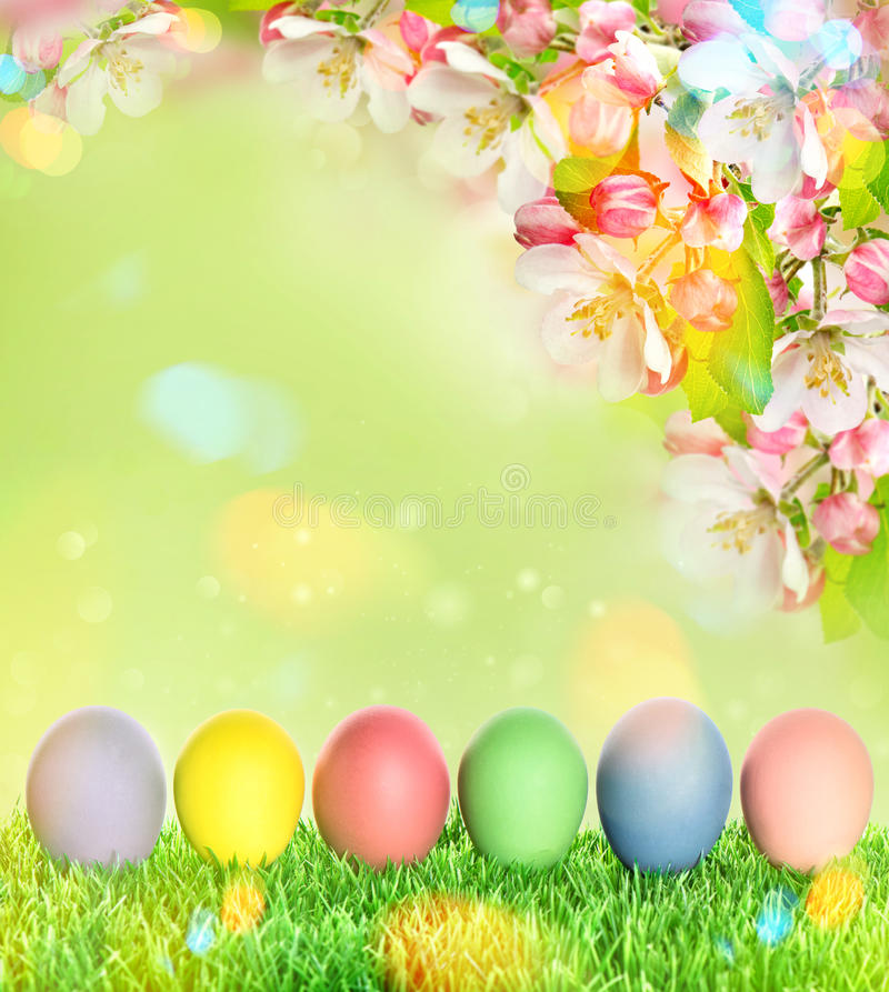 Easter eggs with apple tree blossoms green grass. Easter eggs with apple tree blossoms and green grass. Blurred nature background with light leaks royalty free stock images