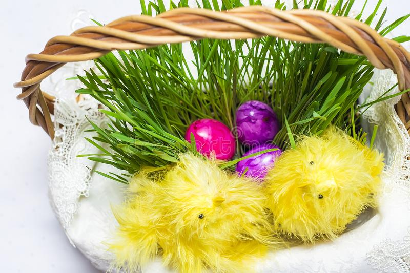 Easter eggs in basket with sprouted wheat. Easter eggs in a basket with sprouted wheat.Next to him sit decorative yellow chickens royalty free stock images