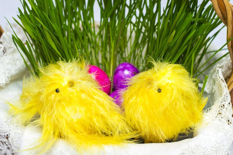 Easter eggs in basket with sprouted wheat. Next to him sit decorative yellow chickens royalty free stock photos
