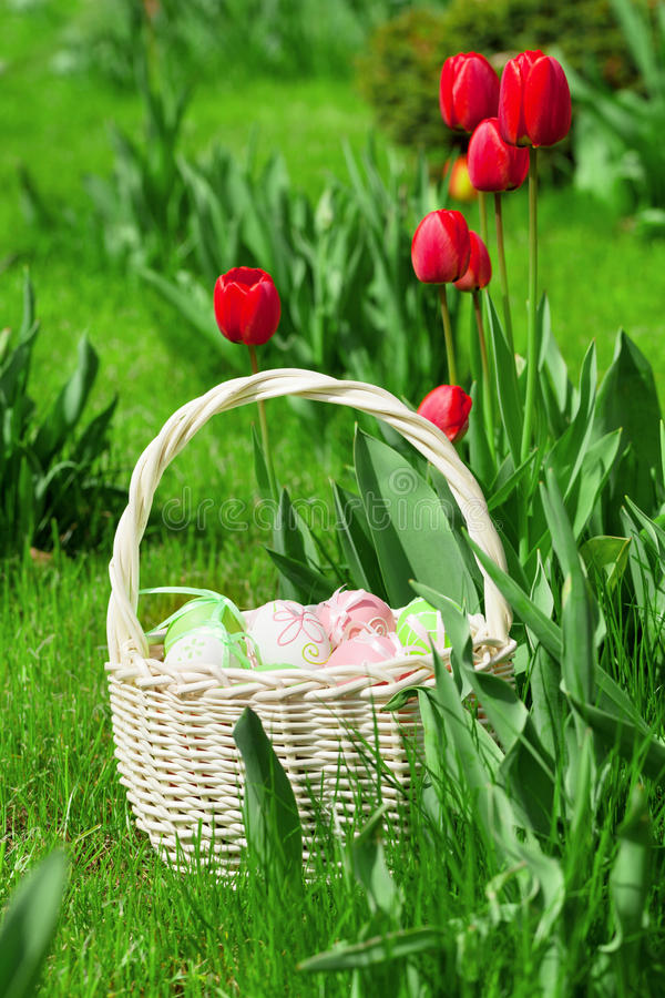 Easter eggs basket and tulip flowers royalty free stock image