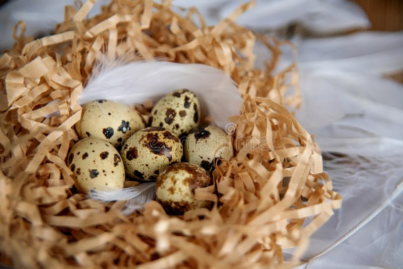 Easter Eggs in bird Nest on rustic wooden background. Spring, Easter or healthy organic food concept royalty free stock photos