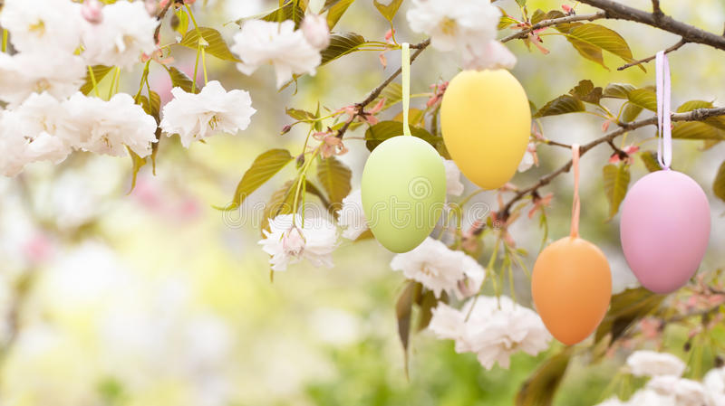Easter eggs on blooming tree stock photos