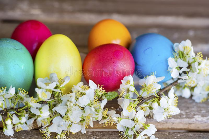 Easter Eggs and Cherry Blossoms. Colorful Easter eggs with cherry blossoms on a wooden background .Easter decoration stock photo