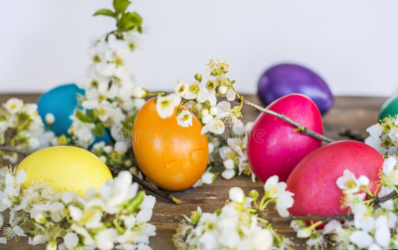 Easter Eggs and Cherry Blossoms. Colorful Easter eggs with cherry blossoms on a wooden background .Easter decoration stock images