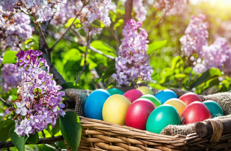 Easter eggs. Easter colorful eggs in the basket on the lilac tree royalty free stock photography