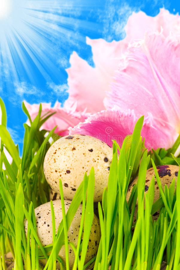 Easter eggs in flower royalty free stock photography
