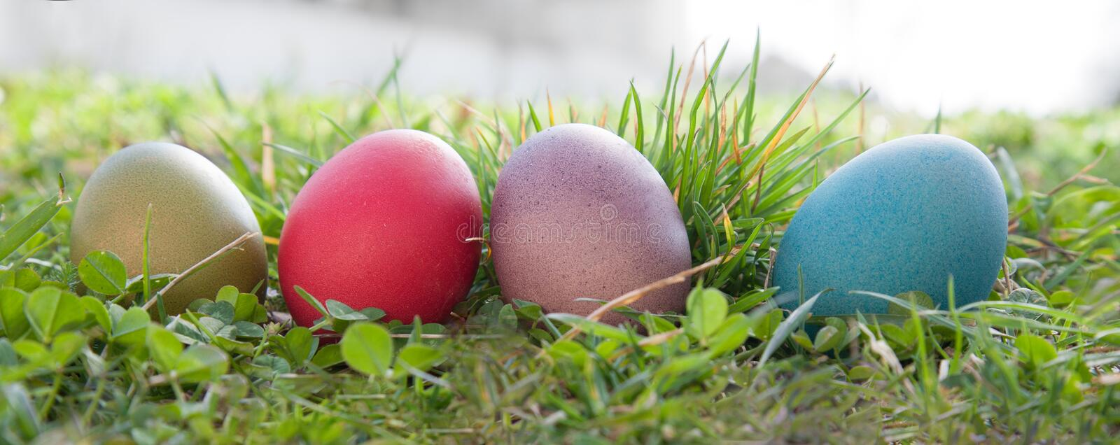 Download Easter eggs stock image. Image of grass, celebration - 39513793