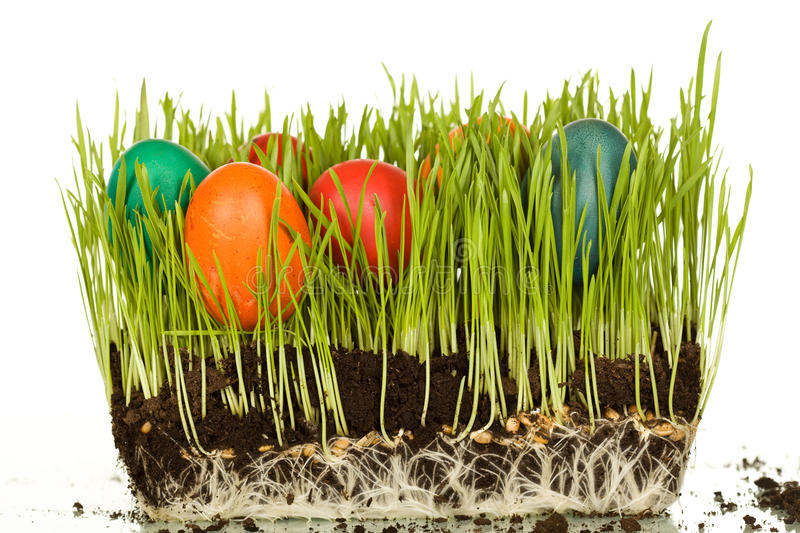 Easter Eggs In Fresh Wheat Blades Stock Images