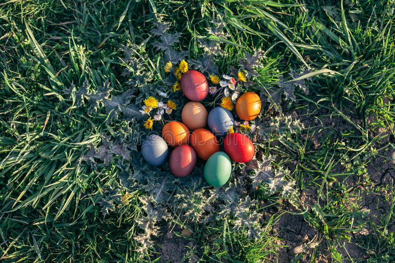Easter Eggs in Grass. Closeup of Easter Eggs in Grass at Sunlight royalty free stock images