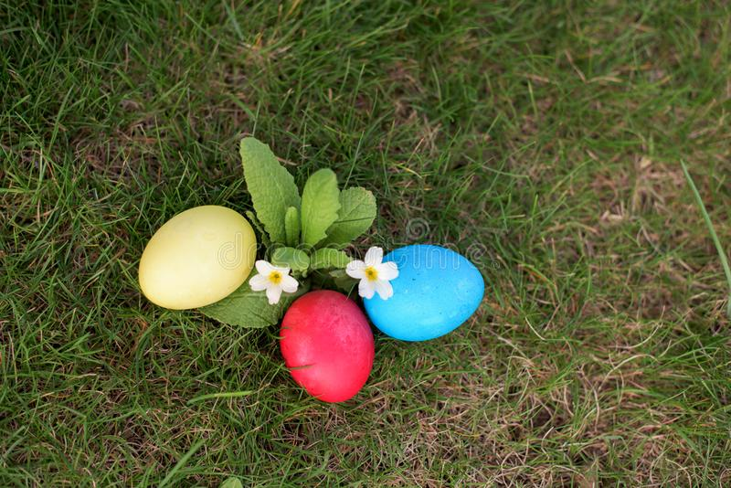 Easter eggs in the grass in the garden royalty free stock image