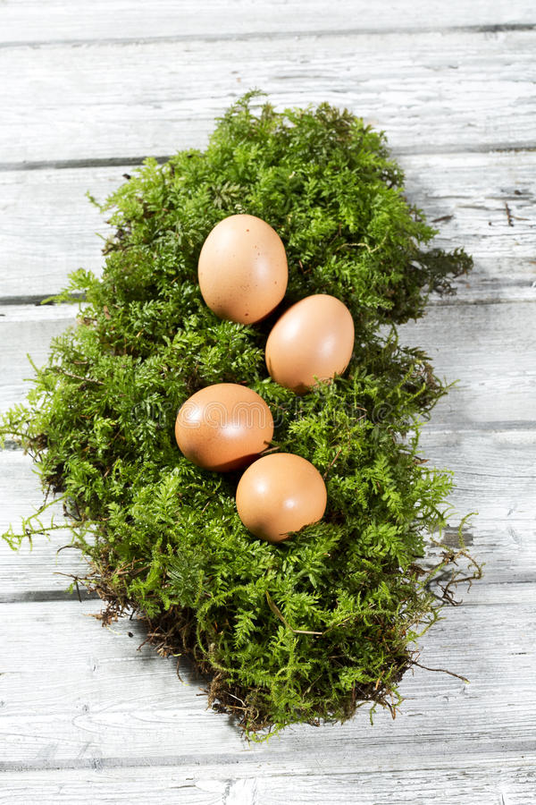 Easter eggs on moss, Easter nest royalty free stock images
