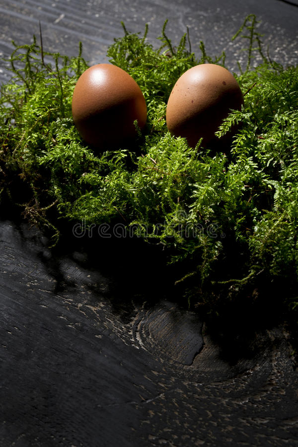 Easter eggs on moss, Easter nest royalty free stock photo