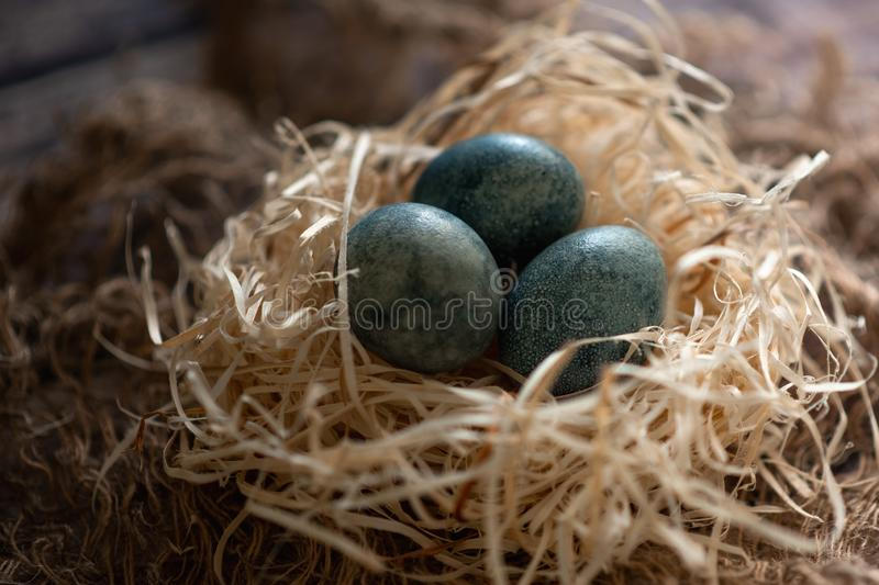 Easter eggs in nest painted by hand in blue color on dark background. Chicken and quail eggs catholic and orthodox easter holiday.  stock photography