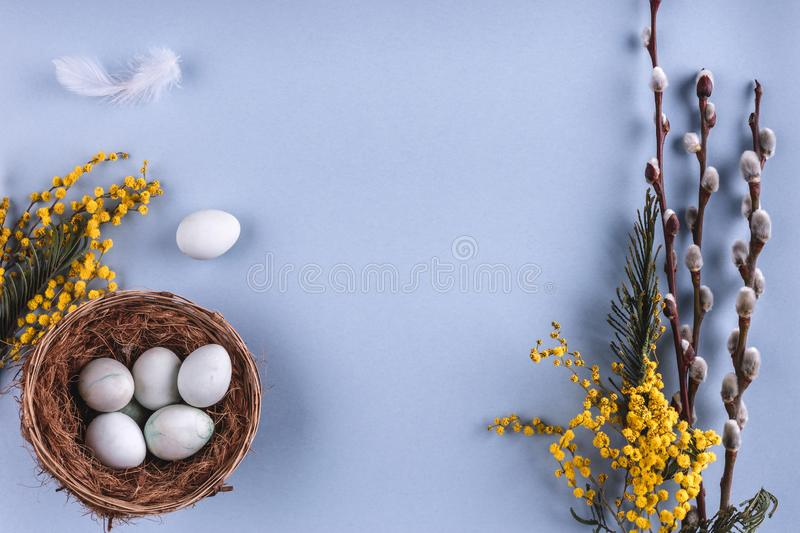 Easter eggs in nest and spring flowers on blue holiday background. Greeting card for Happy Easter. Flat lay, top view.  stock images
