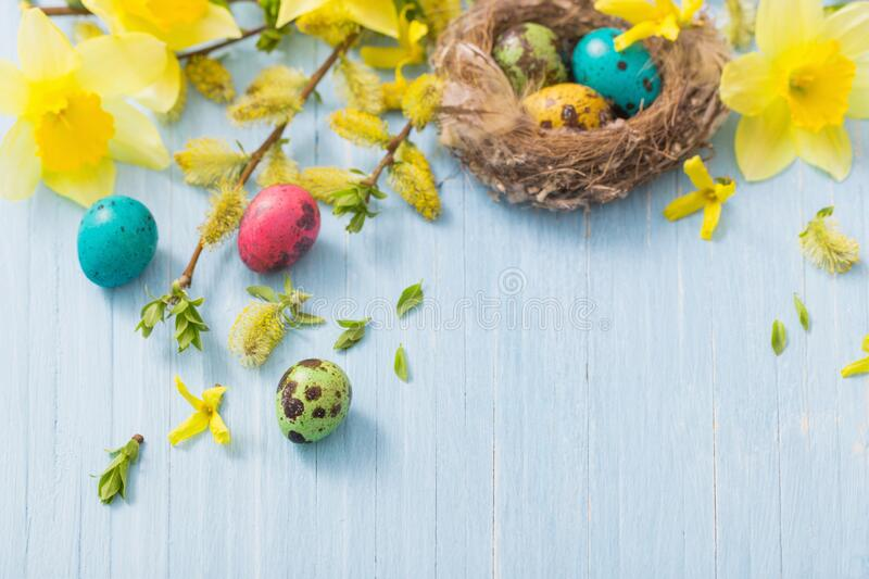 Easter eggs in nest with spring flowers. On wooden background royalty free stock photos