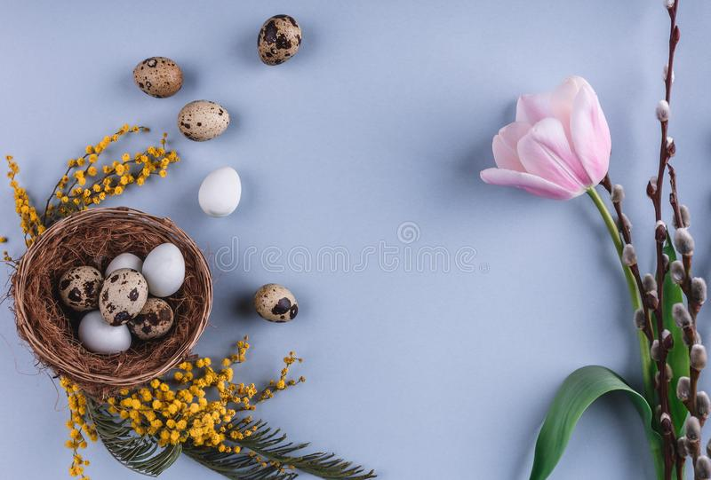 Easter eggs in nest and tulips flowers on spring background. Top view with copy space. Happy Easter card stock photos