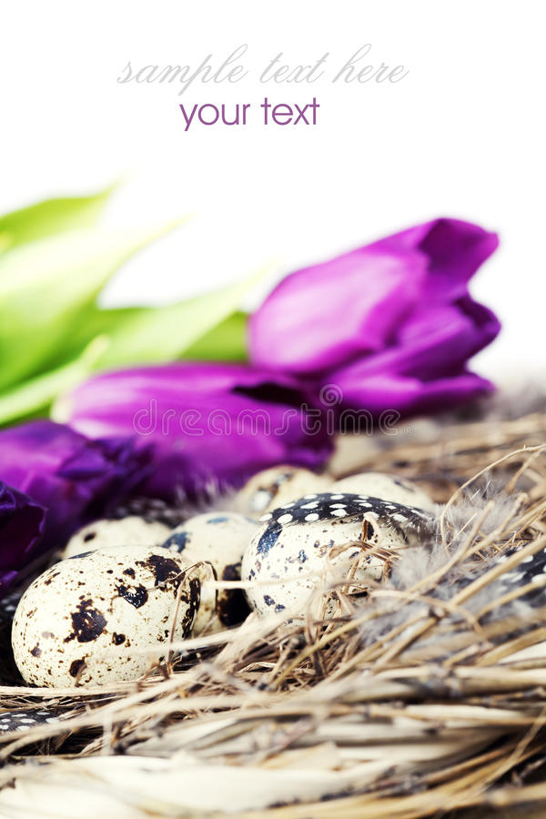 Download Easter Eggs With Purple Tulip Flowers Royalty Free Stock Photo - Image: 22923885