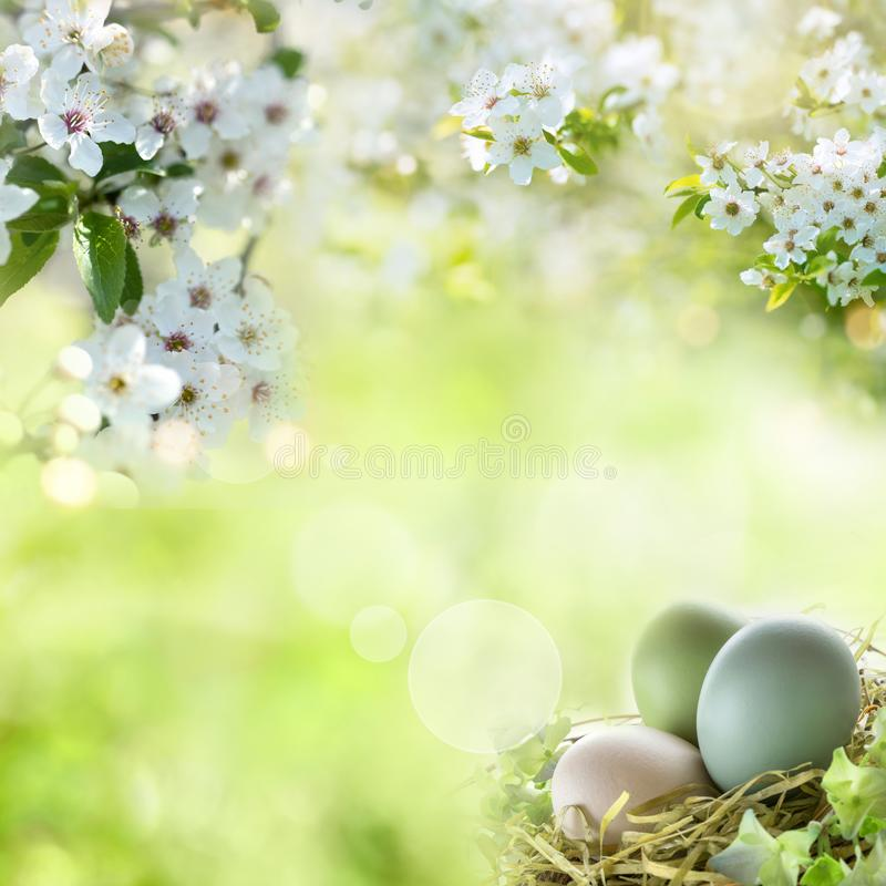 Easter eggs with spring blossoms. Tender easter eggs with spring blossoms and bokeh in sunny landscape stock photo