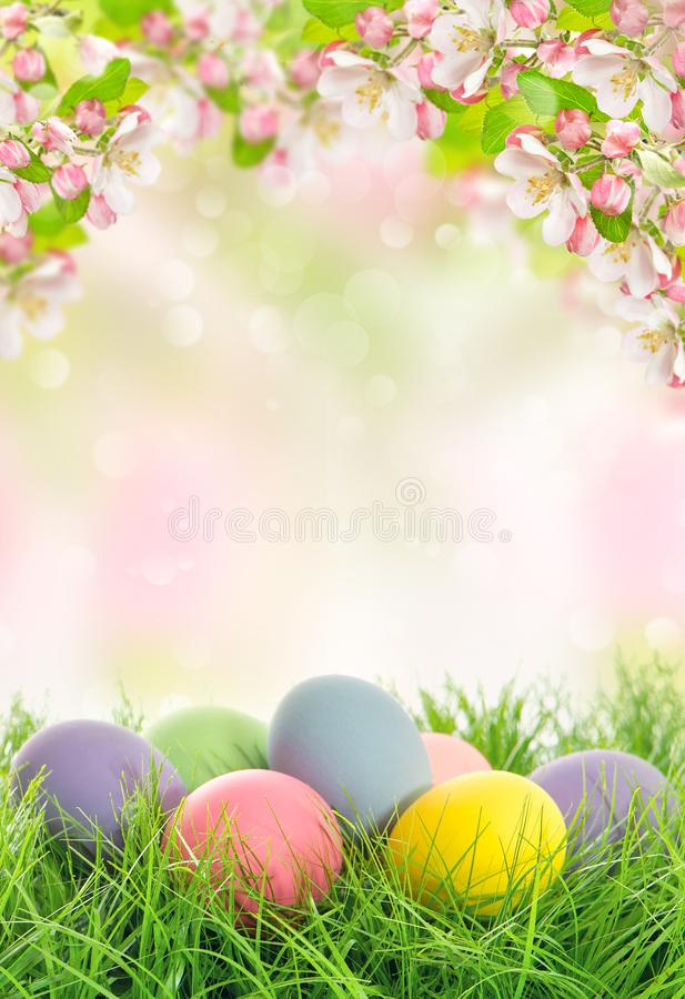 Easter eggs spring flowers Apple tree blossoms. Easter eggs and spring flowers. Apple tree blossoms on blurred nature background royalty free stock photo