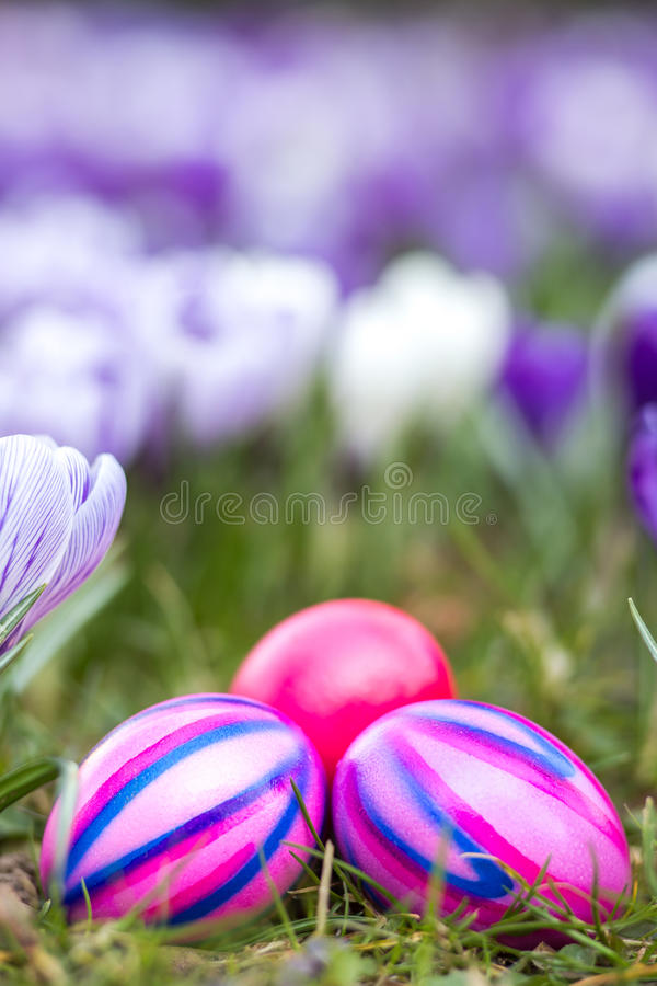 Easter eggs and spring flowers royalty free stock photography