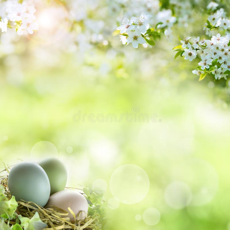 Easter eggs in spring. Easter eggs in a spring landscape wih bokeh stock photo