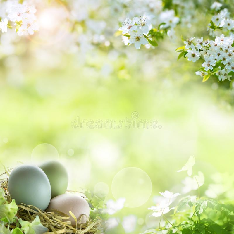 Easter eggs with spring blossoms royalty free stock images