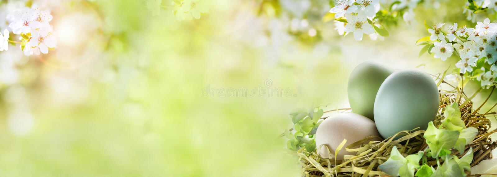 Easter eggs with sunny spring background. Easter eggs with white cherry blossoms and sunny green spring background for a easter card royalty free stock images
